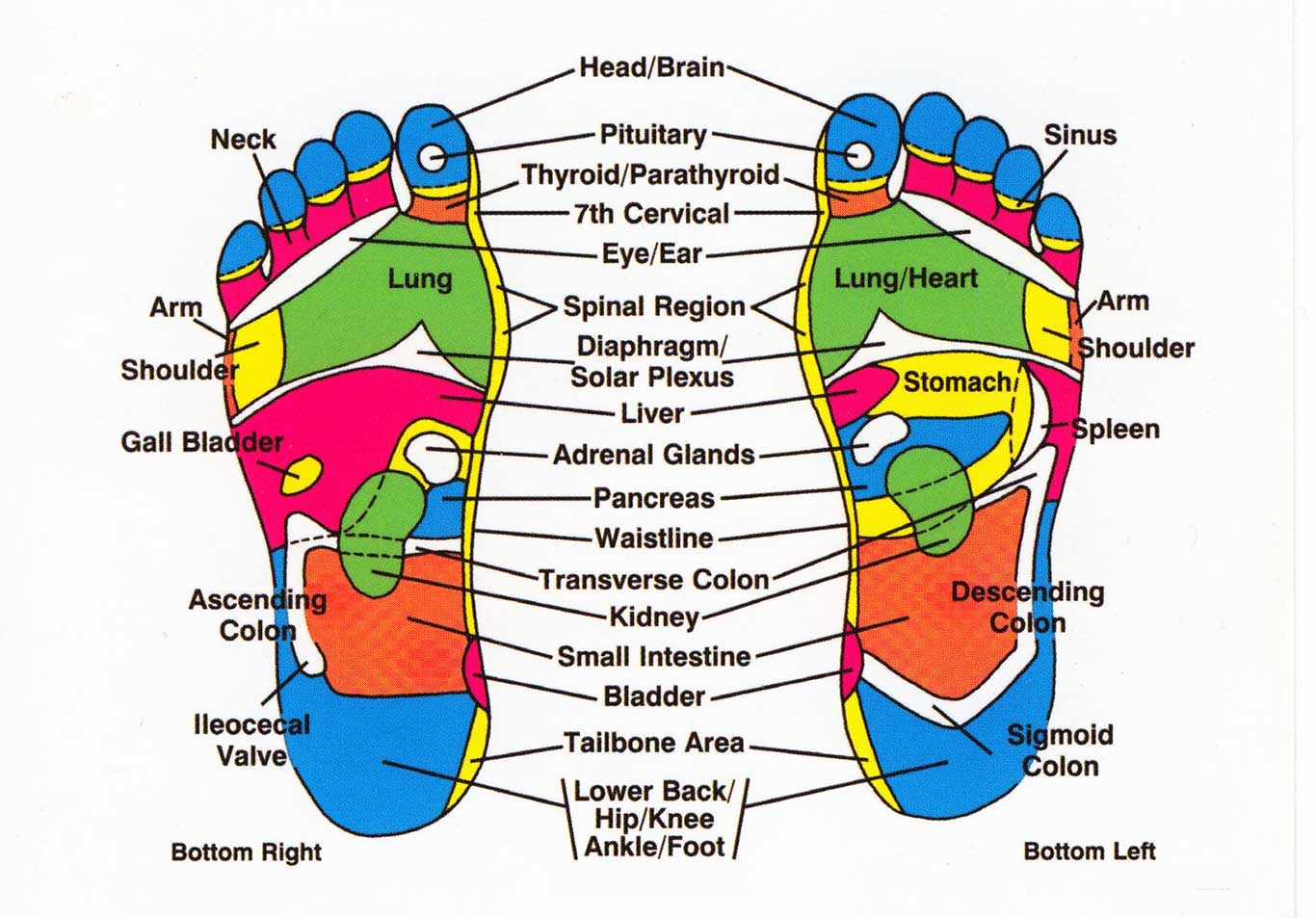 Reflexology And Your Body